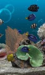 Marine-Aquarium-3.2-PRO36-180x300