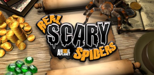 Real-Scary-Spiders